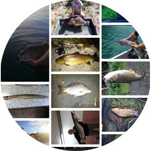 fish trace Fangstatistik App Bilderwand