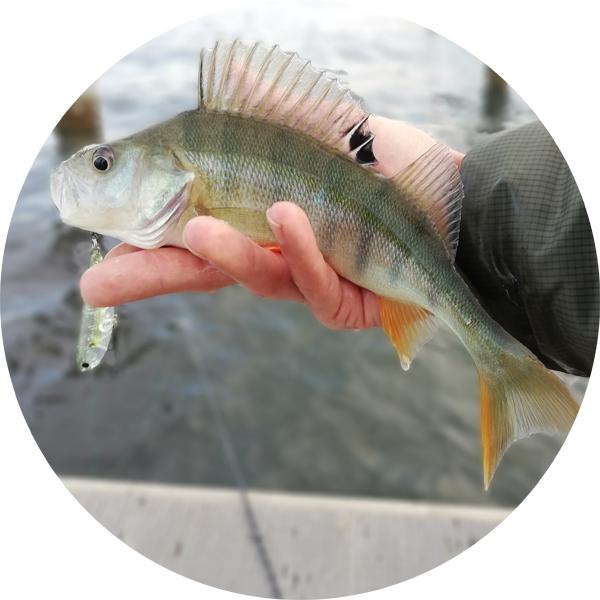 fish trace Fangstatistik App mitgeteilte Fänge